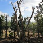 グミの木の様子