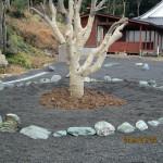 ヤマモモの木周りの整備