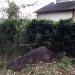 竹垣の復旧