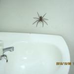 蜘蛛がいました