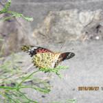 蝶がいました
