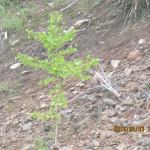 境内の植栽の様子(イチョウ)