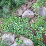 水路の様子(ホテイ草を植えました)