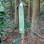 茶の木群の様子