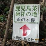 境内の様子(茶の木群)