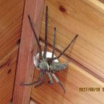 大きな蜘蛛がいました