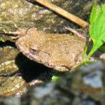 大池の様子(カエルがいます)