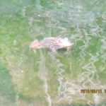 大池の様子(カエルがいました)