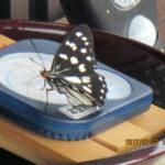 蝶もいました