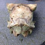 頭部の骨2