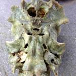 頭部の骨3