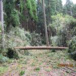 境内の様子(台風通過2日目)