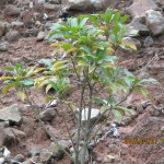 境内の植栽