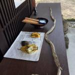 ヘビの抜殻