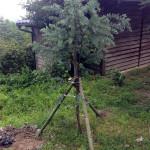 植木の補強