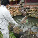 涅槃池の様子(清掃中)