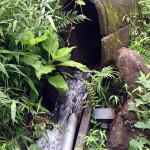 ホタル池からの水路の様子