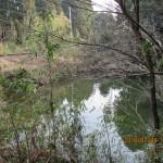 ミタラシ池の周辺様子