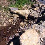 涅槃池からの水路の様子