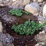 小池の様子