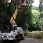 木々の伐採