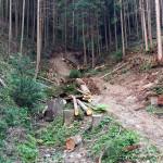 間伐の様子