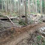 林道のための間伐