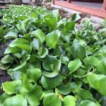 境内の植物の様子