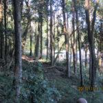 境内周辺の山道(清掃の様子)