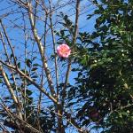 敷地内の花