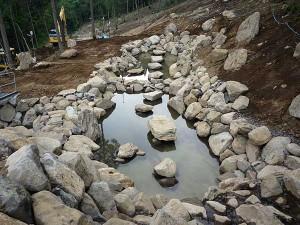 大池の飛び石