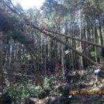 境内周辺の間伐作業