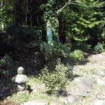 境内付近の様子(茶の木群)