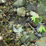 水流の確認