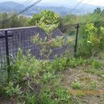境内の植栽の様子(ブルーベリー)