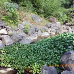 大池の様子