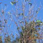 境内の植栽(桜の花)