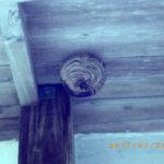 ハチの巣の様子