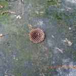 ハチの巣の様子(駆除しました)