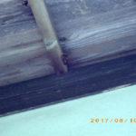 屋根裏(蜂の巣がありました)
