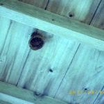 蜂の巣の様子