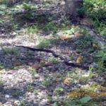 境内に蛇がいました