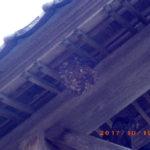 蜂の巣がありました