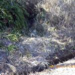 境内の様子(草刈り前)