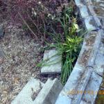 境内の植栽の様子(彼岸花)