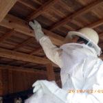 蜂の巣駆除の様子