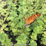 境内に蝶がいました