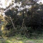 台風25号通過後の境内の様子