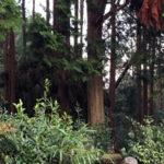 供養塔群付近の倒木
