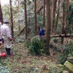 倒木伐採、清掃の様子